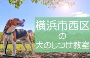 横浜市西区の犬のしつけ教室|おすすめのドッグスクールはココです!