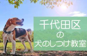 千代田区の犬のしつけ教室|おすすめのドッグスクールはココです!
