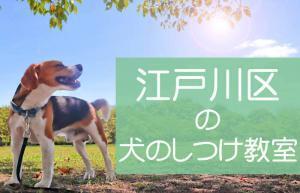 江戸川区の犬のしつけ教室|おすすめのドッグスクールはココです!