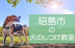 昭島市の犬のしつけ教室|おすすめのドッグスクールはココです!