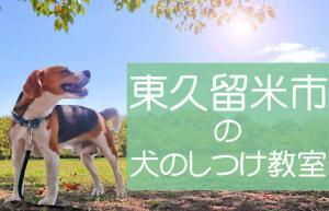 東久留米市の犬のしつけ教室|おすすめのドッグスクールはココです!