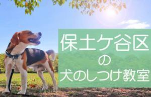 横浜市保土ケ谷区の犬のしつけ教室|おすすめのドッグスクールはココです!