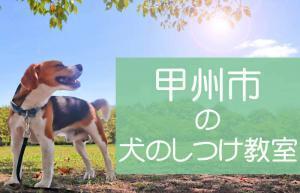 甲州市の犬のしつけ教室|おすすめのドッグスクールはココです!