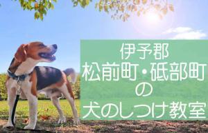 伊予郡松前町・砥部町のしつけ教室|おすすめのドッグスクールはココです!
