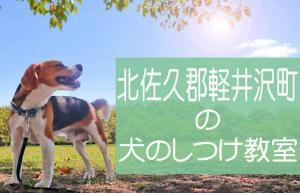 北佐久郡軽井沢町の犬のしつけ教室|おすすめのドッグスクールはココです!