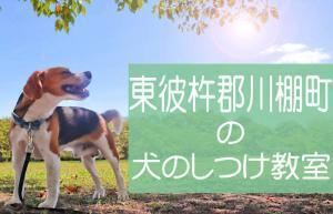 東彼杵郡川棚町の犬のしつけ教室|おすすめのドッグスクールはココです!