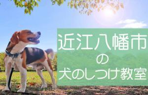 近江八幡市の犬のしつけ教室|おすすめのドッグスクールはココです!