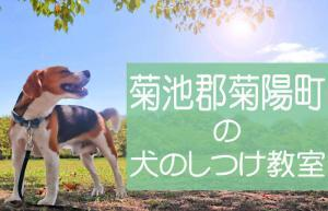 菊池郡菊陽町の犬のしつけ教室|おすすめのドッグスクールはココです!