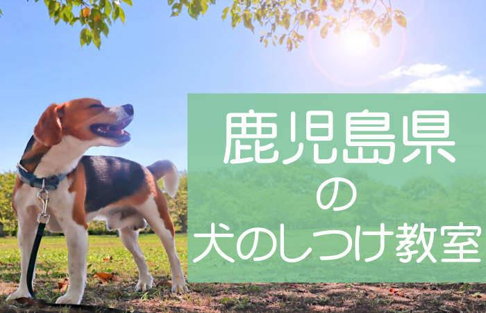 鹿児島県の犬のしつけ教室 おすすめのドッグスクールはココです!