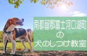南都留郡富士河口湖町の犬のしつけ教室 おすすめのドッグスクールはココです!