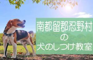 南都留郡忍野村の犬のしつけ教室 おすすめのドッグスクールはココです!